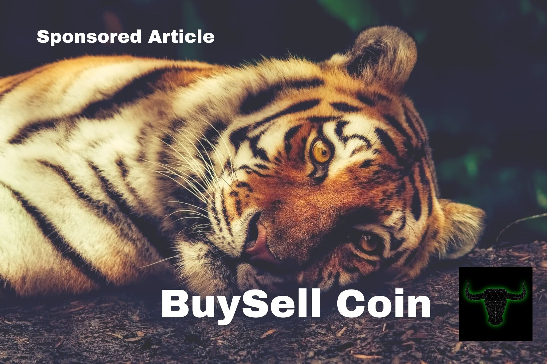 BuySell Coin